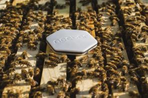 Nectar: Montreal's Bee-Saving Startup Effort